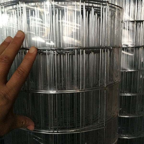Galvanized Weled Wire Mesh For Sale