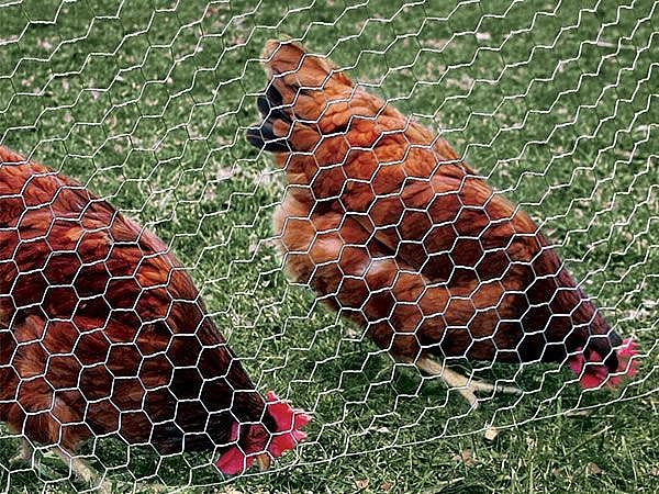 Hexagonal Poultry Wire